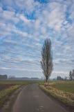 Route allant après un arbre Photo stock