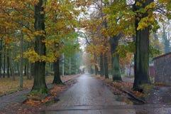 Route après une pluie Images libres de droits