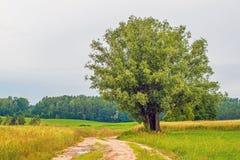 Route arénacée de pays avec l'arbre photo libre de droits