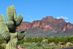 Route 66 Arizona cactus red mountain. Red Rocky Bluff cactus along route 66 New Mexico and Arizona Stock Photos