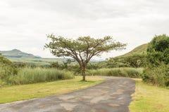 Route au début du sentier de randonnée de gorge de Tugela en Drakensberg Image libre de droits