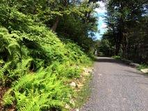 Route au parc d'état de Minnewaska Photos stock