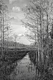 Route au parc national de marais de nulle part Image libre de droits