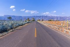 Route au paysage de tequila photographie stock libre de droits