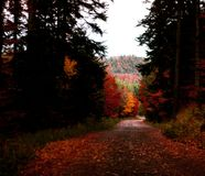 The route in autumn forest. Colourful route in Alsace royalty free stock photography