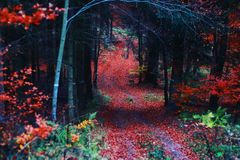The route in autumn forest. Colourful route in Alsace royalty free stock photos