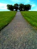 Route aux arbres Photo libre de droits
