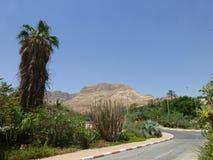 Route aux kibboutz Ein Gedi en Israël images libres de droits
