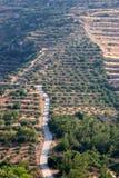 Route aux oliveraies Photos stock