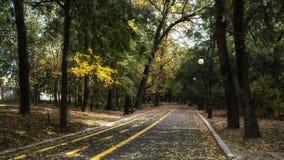 Route avec des allées d'arbre photos stock