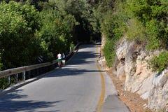 Route avec des arbres Photo libre de droits
