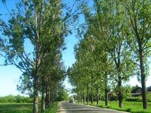 Route avec des arbres alignés Photo libre de droits