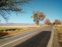 Route avec des arbres alignés Photos stock