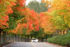 Route avec des arbres d'érable Image stock