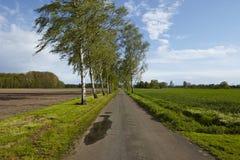 Route avec des arbres de bouleau devant un ciel bleu photo libre de droits