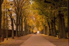 Route avec des arbres les deux côté Images libres de droits