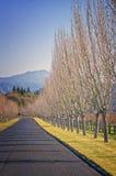 Route avec des arbres, pays de vin la Californie Images libres de droits