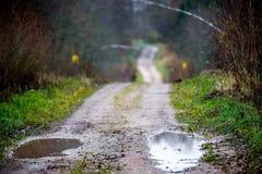 Route avec des magmas dans la forêt photos libres de droits