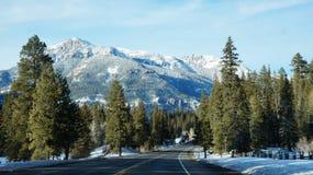 Route avec l'arbre de brochets pendant l'hiver Image stock