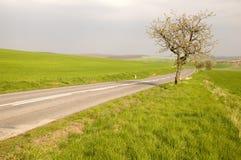 Route avec la ruelle d'arbre photo libre de droits