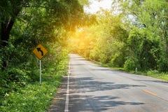 Route avec les arbres verts autour et les arbres de penchement au-dessus de la route Image stock