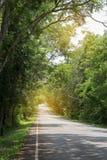 Route avec les arbres verts autour et les arbres de penchement au-dessus de la route Images stock