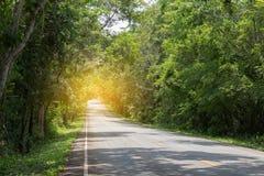 Route avec les arbres verts autour et les arbres de penchement au-dessus de la route Photographie stock