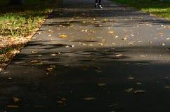 Route avec les feuilles oranges tombées Photo libre de droits