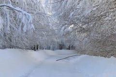 Route blanche Photographie stock libre de droits