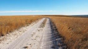 Route blanche de Chulky par un champ d'herbe d'or à la lumière du soleil L'appareil-photo se déplace lentement montre de gauche à clips vidéos