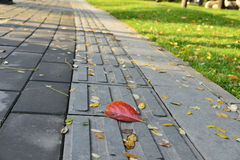 The route for blind peoples in Autumn Royalty Free Stock Photos