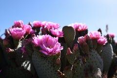 Route 66, Blumen und Himmel stockfotos