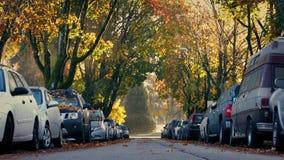 Route bordée d'arbres avec passer le camion dans l'automne banque de vidéos