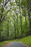 Route bordée d'arbres reculée Image stock