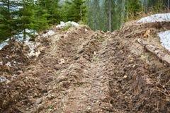 Route boueuse dans la forêt Photo libre de droits