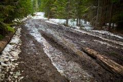 Route boueuse dans la forêt Photographie stock