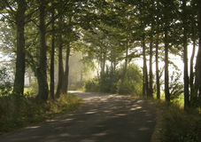 Route brumeuse Image stock