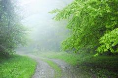 Route brumeuse dans la forêt image libre de droits
