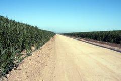 Route chaude, sèche et poussiéreuse de zone de ferme de désert Photographie stock libre de droits
