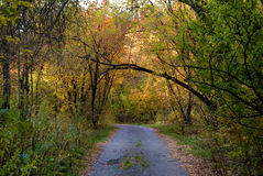 Route chez Autumn Forest Images stock