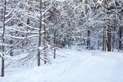 route couverte de neige dans la forêt conifére d'hiver photo stock