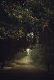 Route couverte par des arbres Photo stock