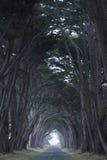 Route couverte par un auvent des arbres. Photo stock