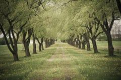 Route délimitée par des arbres Photo stock