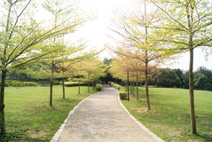 Route délimitée par des arbres Photos libres de droits
