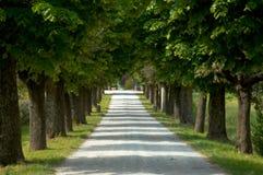 Route délimitée par des arbres de gravier dans Ital Photos libres de droits