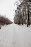 Route d'allée de neige dans la forêt d'hiver Photographie stock