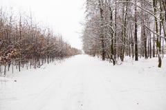 Route d'allée de neige dans la forêt d'hiver Images libres de droits