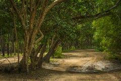 Route d'Amérique centrale Photographie stock