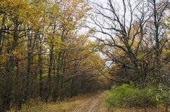 Route d'amorce dans la forêt d'automne Photographie stock libre de droits